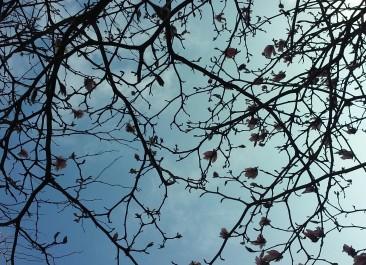 Flores de Abril en el cielo